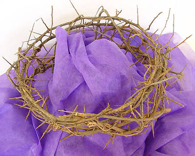 Crown of Thorns - Large 11-12