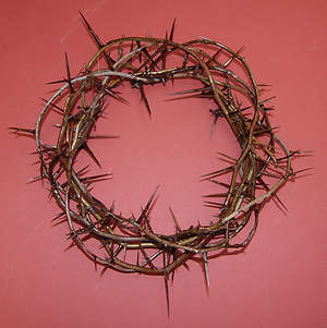 Crown of Thorns 12 Inch
