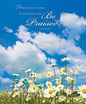 Daisies Summer Bulletin 2014, Large (Package of 50)