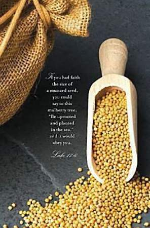 Mustard Seed Scripture Series Bulletin, Regular (Package of 50)