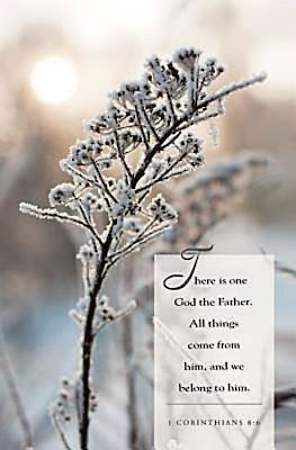 Winter Twig Scripture Series Bulletin, Regular (Package of 50)