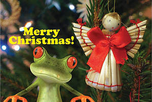 Merry Christmas Frog Postcard (Package of 25)
