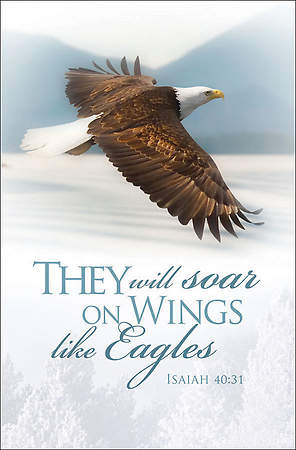 They Will Soar