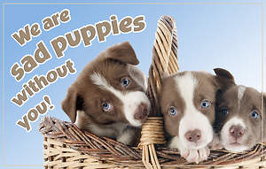 We are sad puppies without you! - Thinking of You Postcard - Pkg 25